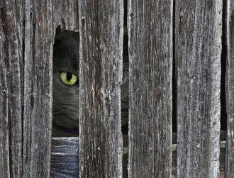 'Cat in a woodpile' is the latest internet photo sensation – can you see it?