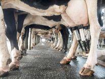 Robotic cow teat sprayer recruited to produce Irish milk