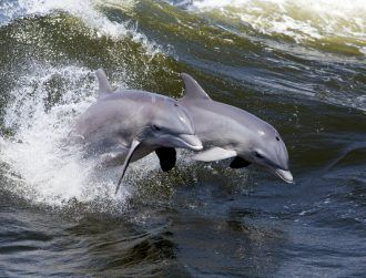 Black Sea dolphins found to speak in sentences, responding in turn
