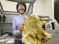 How did our teeth evolve? A 3D printed fish fossil might have a clue