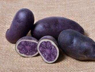 Ireland as we know it, but with purple spuds