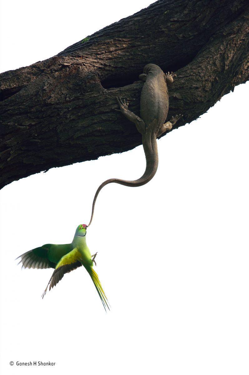 Eviction attempt. Ganesh H Shankar/Winner, Birds