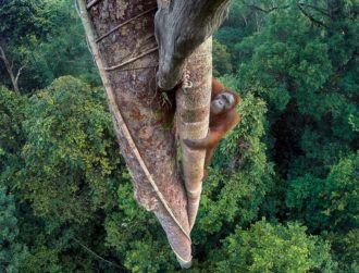 10 amazing images that bagged wildlife photography awards