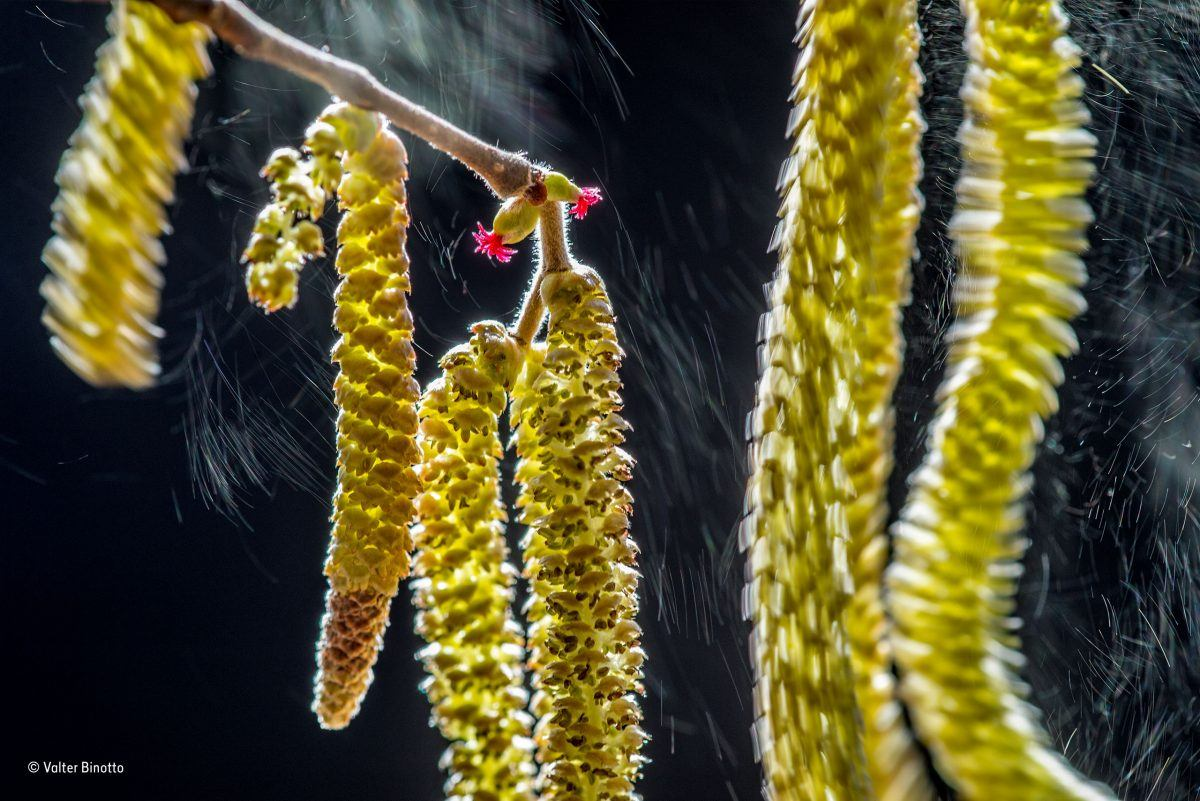 Wind composition. Valter Binotto/Winner, Plants and Fungi