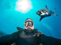 Shark attacks and other terrifying tales from the deep
