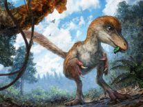 Amazing, real dinosaur tail discovered by chance at a market