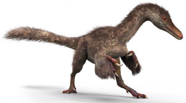 A small coelurosaur. Image: Chung-tat Cheung and Yi Liu