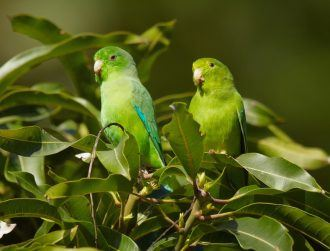 Parrotlets, lasers and tiny goggles show drones are flying all wrong