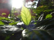 Quantum physics and photosynthesis make solar cells brilliant