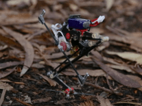 Meet Salto, the most agile wall-jumping robot ever built