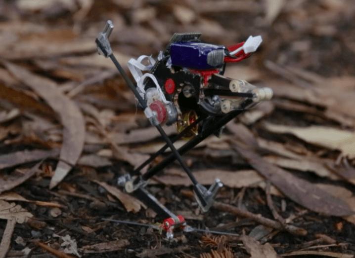 Agile robot Salto