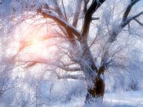 First day of winter celebrated with solstice Google Doodle
