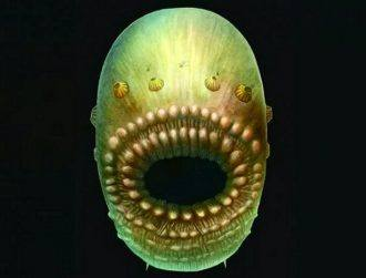 Your earliest known ancestor was a weird, sack-like sea creature with no anus