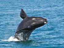 HummingWhale virus is the new scourge of the Google Play Store