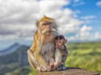 Primates disappearing at alarming rate, 60pc of species under threat