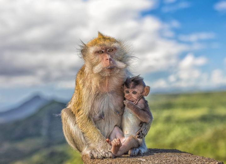 Image: Karl Steiner /Shutterstock