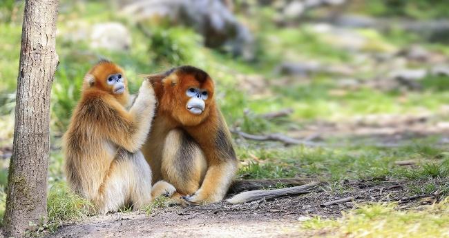 Image: Wang LiQiang/Shutterstock