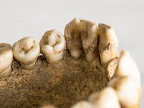 Fossilised primate jaw discovery sheds new light on human evolution