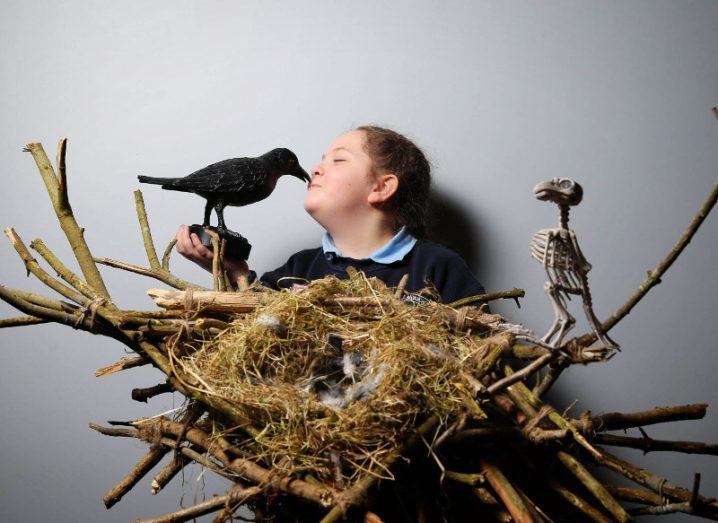 Secret lives of crows and badgers are natural winners at Intel Mini Scientist Grand Final
