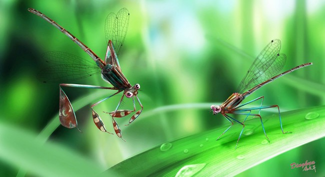 Reconstruction showing the courtship behaviour of Cretaceous-era damselflies. Image: Yang Dinghua