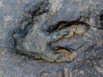 'Cretaceous equivalent of the Serengeti' found in Australia