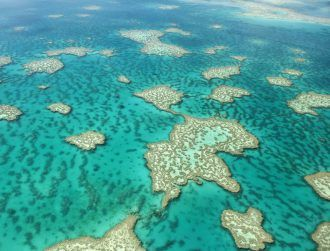 The Great Barrier Reef is dying in front of our very eyes