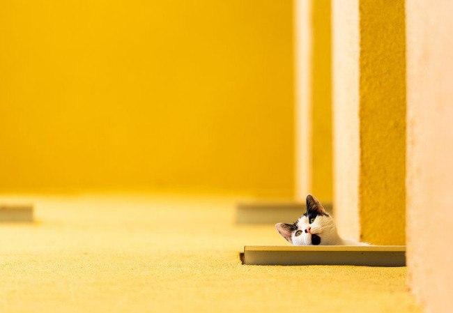 Cat Image: Gabril Constantin Marian/Comedy Pet Photo Awards