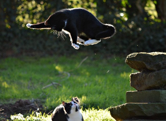 Cats Image: Heather Ross/Comedy Pet Photo Awards