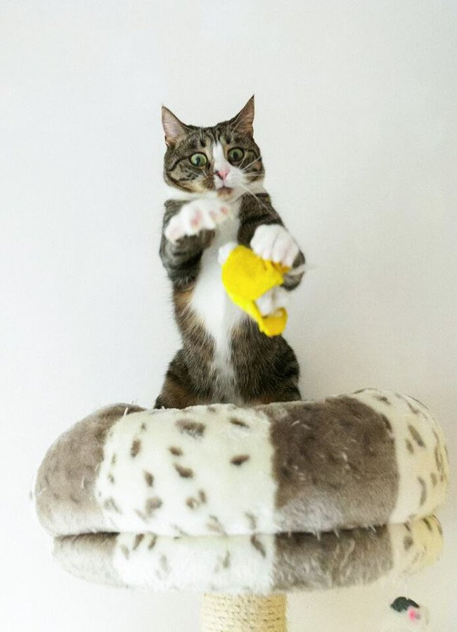 Startled cat. Image: Krzysztof Smejlis/Comedy Pet Photo Awards