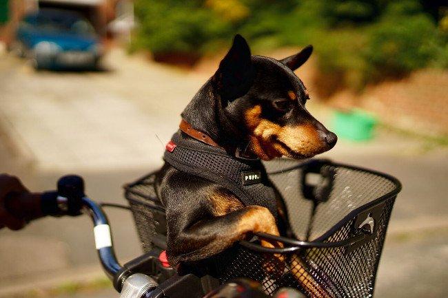 Suave dog. Image: Simon DeKnock/Comedy Pet Photo Awards