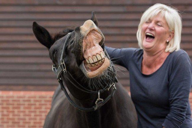 Laughing horse. Image: Stephen DeHavilland/Comedy Pet Photo Awards