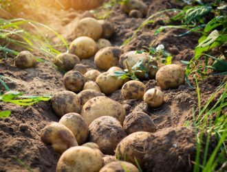 The humble potato is the super crop that could grow on Mars