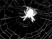 Tangled web: Internet industry needs to focus on best practice