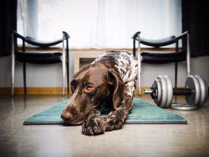 dog-gym