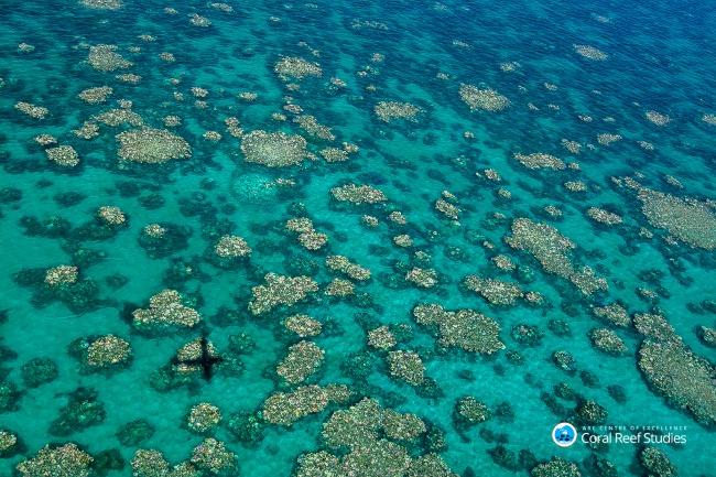 Cairns Townsville bleaching. Image: Ed Roberts