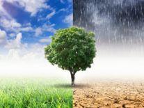 Dozens of Irish researchers secure €12.9m for climate studies