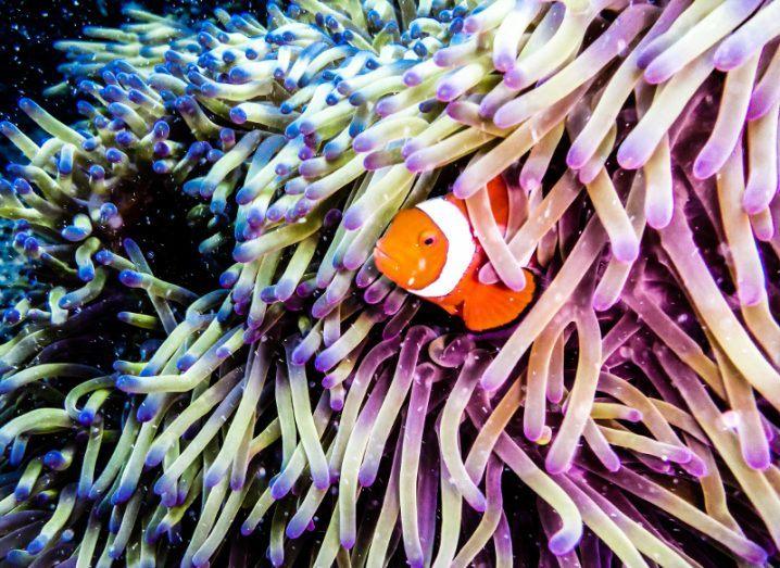 The Great Barrier Reef. Image: Benedikt Juerges/Shutterstock