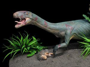 Life model of the new species Teleocrater rhadinus, a close relative of dinosaurs, preying upon a juvenile cynodont, a distant relative of mammals. Image: Museo Argentino de Ciencias Naturales