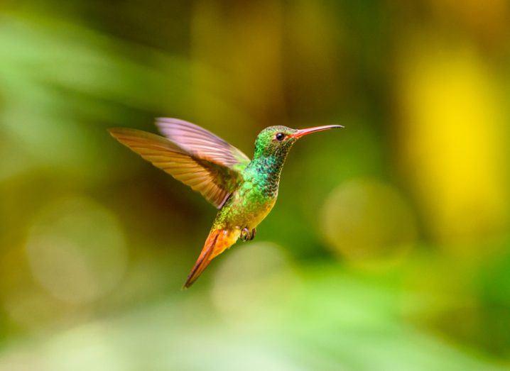 Humming bird. Image: Anton_Ivanov/Shutterstock