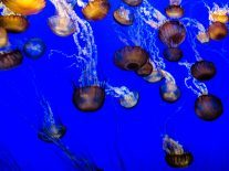 Should you pee on a jellyfish sting? It might not be the best idea…