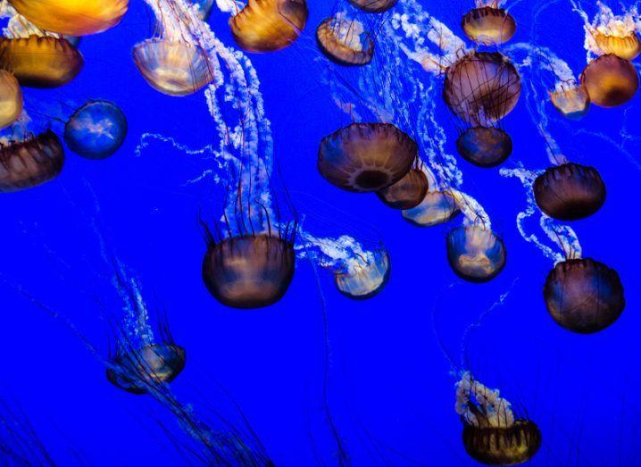 Jellyfish. Image: Pavlina Trauskeova/Shutterstock