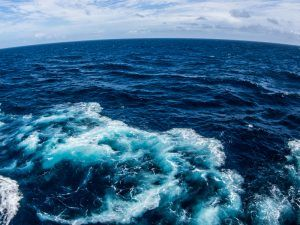 Garena Sea. Image: william p teed.Shutterstock