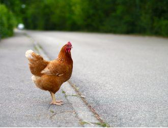 Why did the chicken cross the road? To get to the smart data