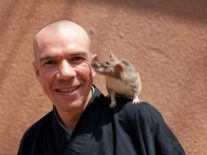 Rats all folks! Meet Bart's rodent mine-detection agency