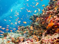 How much is the Great Barrier Reef worth? Study shows it's too big to fail