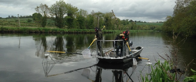 Inland Fisheries Ireland staff electrofish the River Barrow as part of the research. Image: Inland Fisheries Ireland