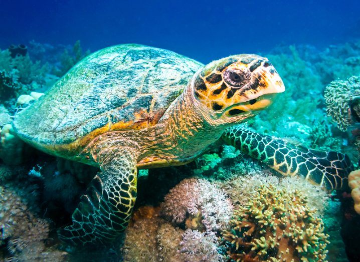 A turtle, or more? Image: Iness Arna/Shutterstock
