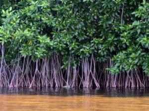 A lovely lil' mangrove forest. Image: Oliver Osvald/Shutterstock