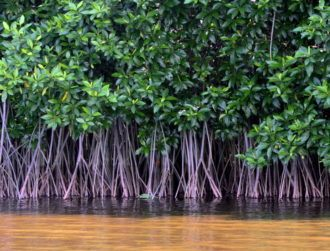 Yet another fund for European firms as Mangrove plays hand