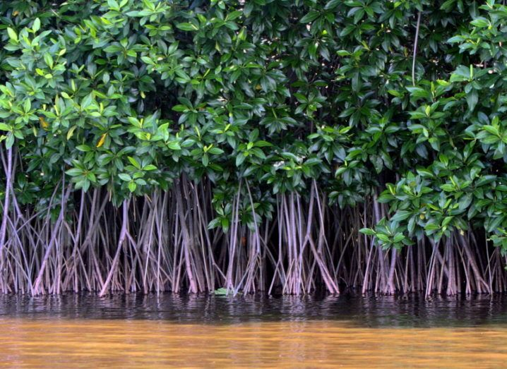 A lovely lil' mangrove forest. Image: Oliver Osvald/Shutterstock